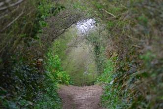 green-lane-aymer-cove