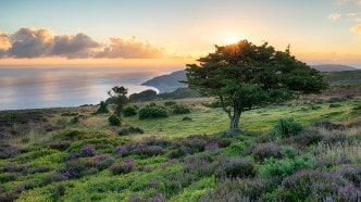 somerset-exmoor-view