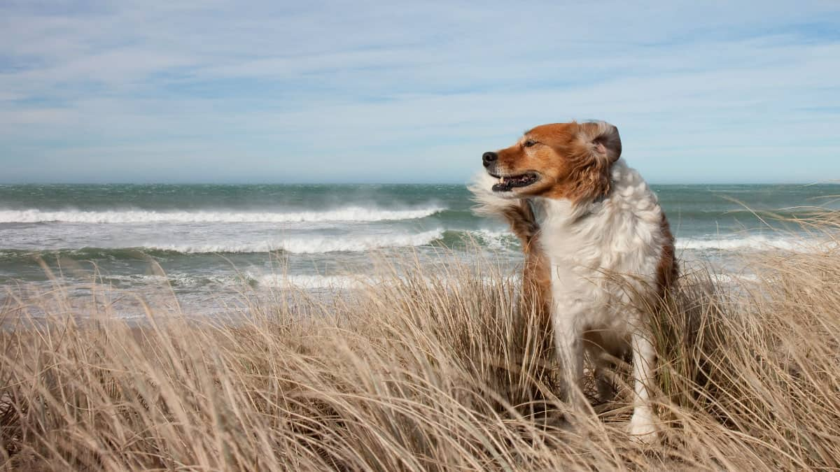 Dog-sand-dunes
