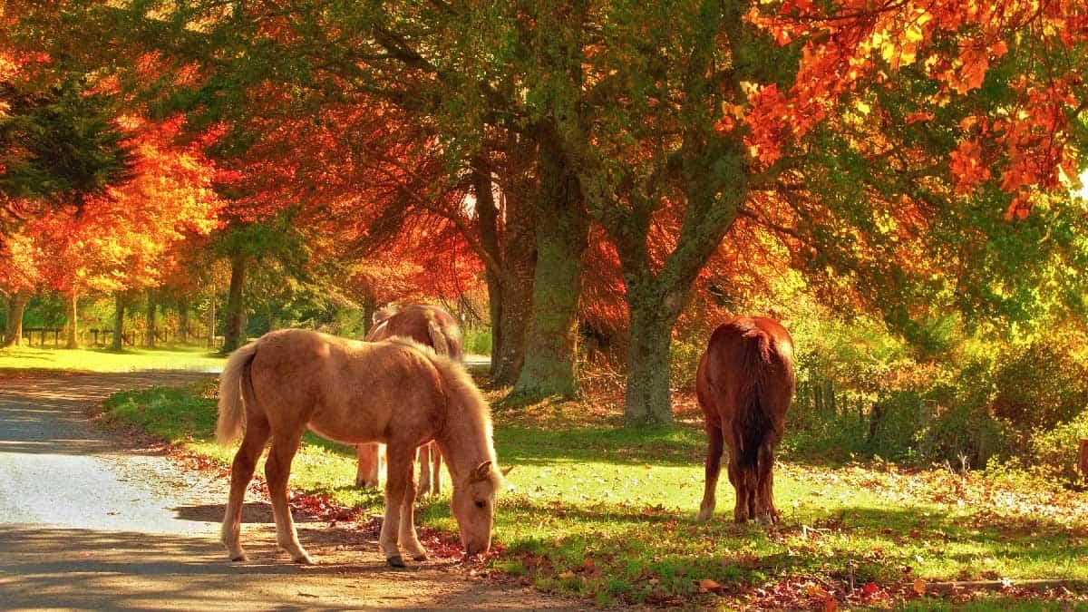 Ponies-autumn