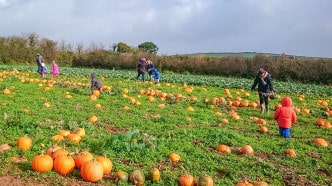 Pumpkin picking in South Devon