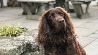 dog-friendly-pubs-devon