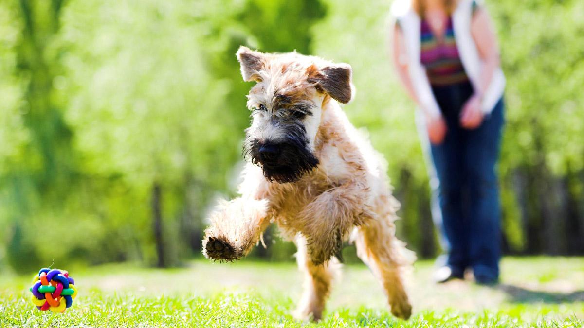 dog-friendly-cottages