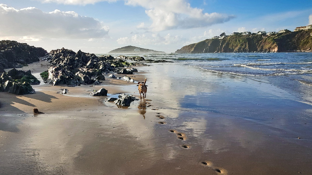 bantham-dog-friendly