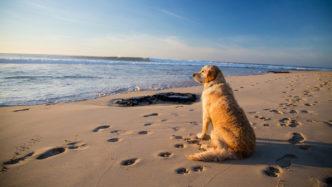 dog-friendly-beaches