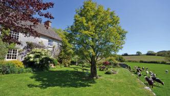 Neadon-Cottage