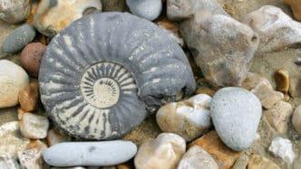 jurassic-coast-fossil-hunting