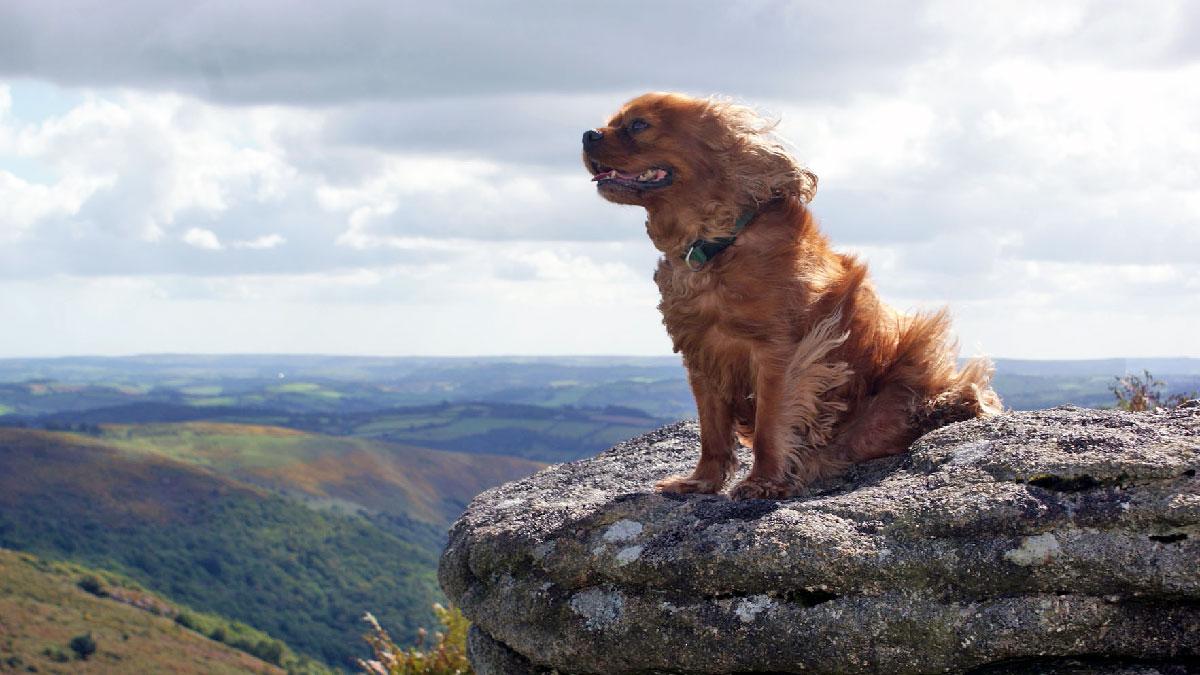 dog-walks-dartmoor