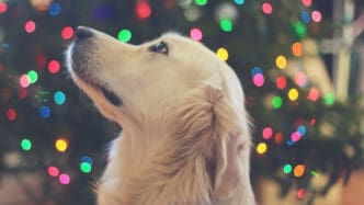 dog-by-colourful-christmas-lights