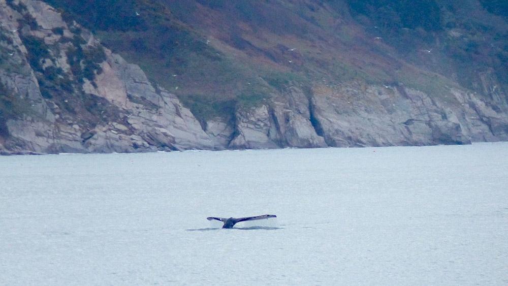humpback-whale-start-bay