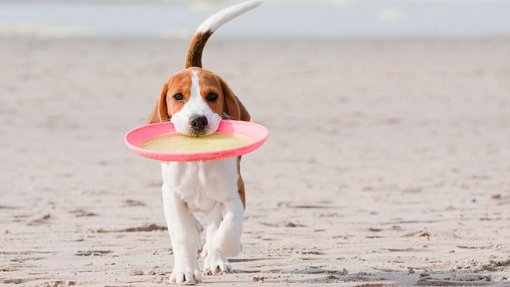 dog-walks-dorset
